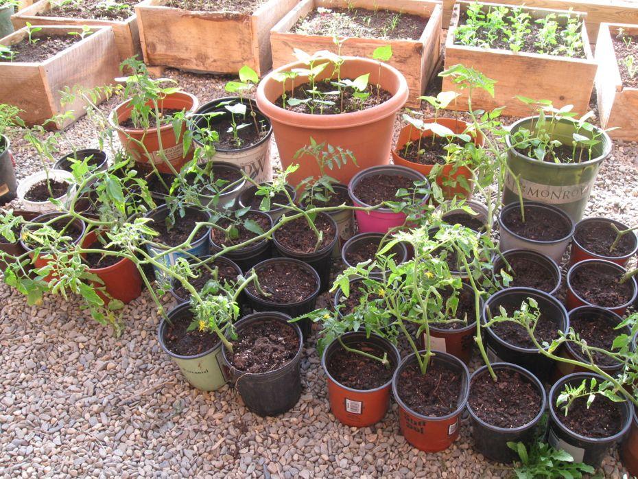 Radix Plants.jpg