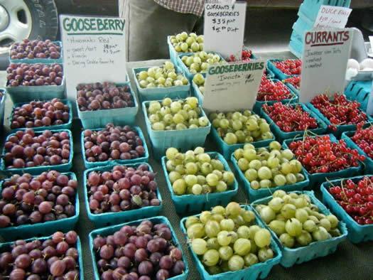 ithaca farmers market gooseberries