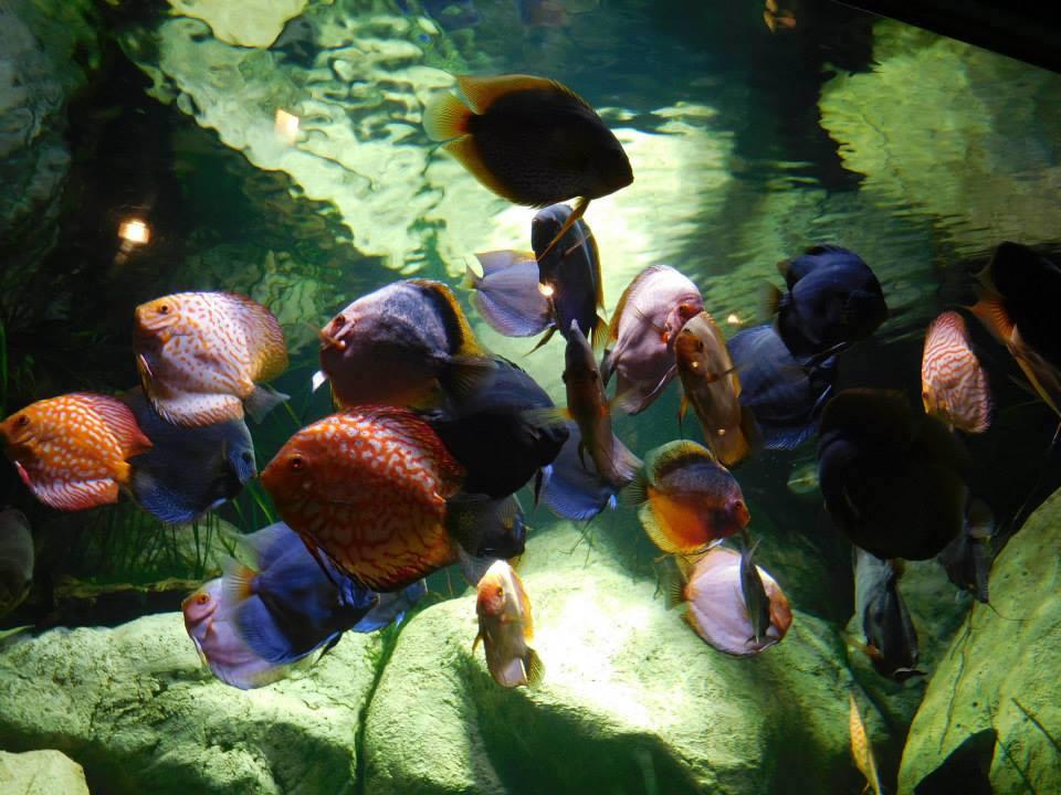 long_island_julie_madsen_long_island_aquarium.jpg