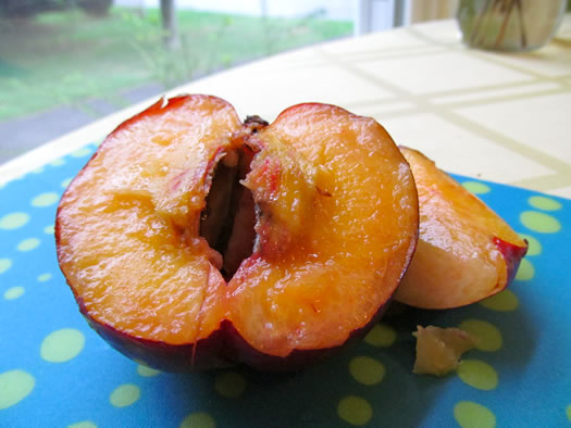 maynard_farms_yellow_nectarine.jpg