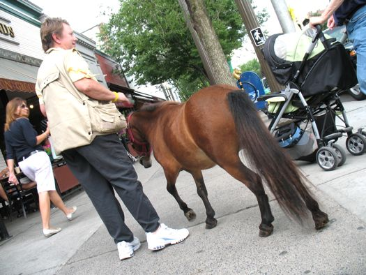 mini horse from behind