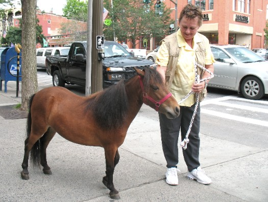 mini horse in saratoga