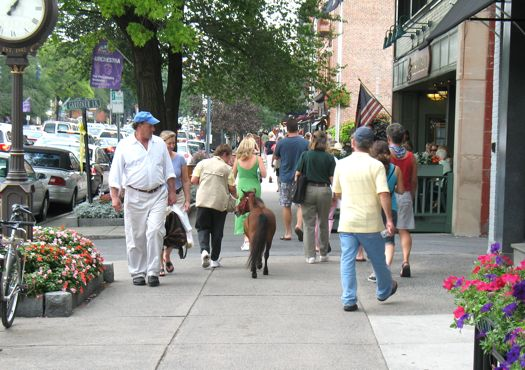 mini horse on broadway
