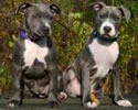 mohawk hudson railroad puppies