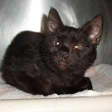 mohawk hudson rescued cat slinky