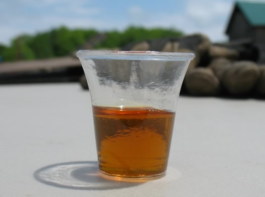 mountain winds maple syrup sample