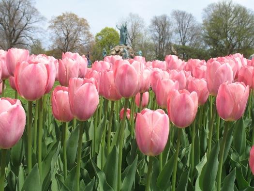 mystic_van_eijk_tulips.jpg