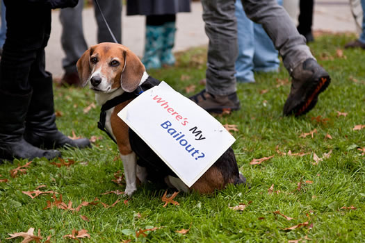 occupy albany dog bailout sebastien