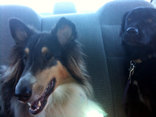 otto and daisy in backseat