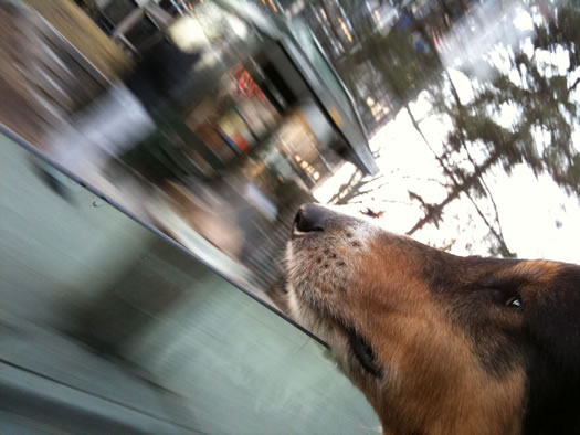 otto car window whizzing by