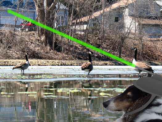 otto geese laser