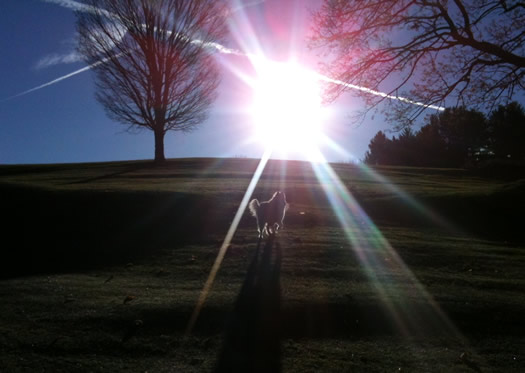 otto running up golf course hill