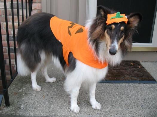 Otto pumpkin