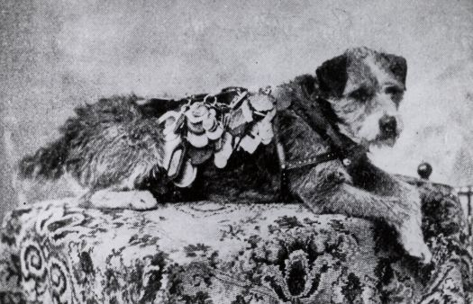 owney with his medals