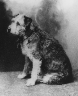 Owney in profile