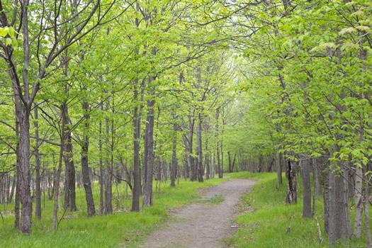 peebles island walking path