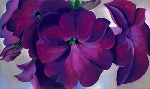 O'Keefe purple petunia