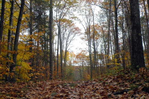 pittsfield_state_forest_hiking_path_in_fall.jpg
