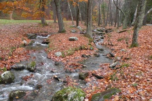 pittsfield_state_forest_lulu_brook.jpg