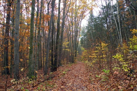 pittsfield_state_forest_walking_path_fallen_leaves.jpg