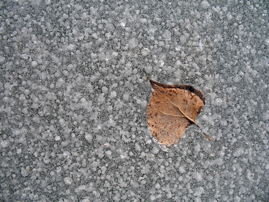 pond ice 8