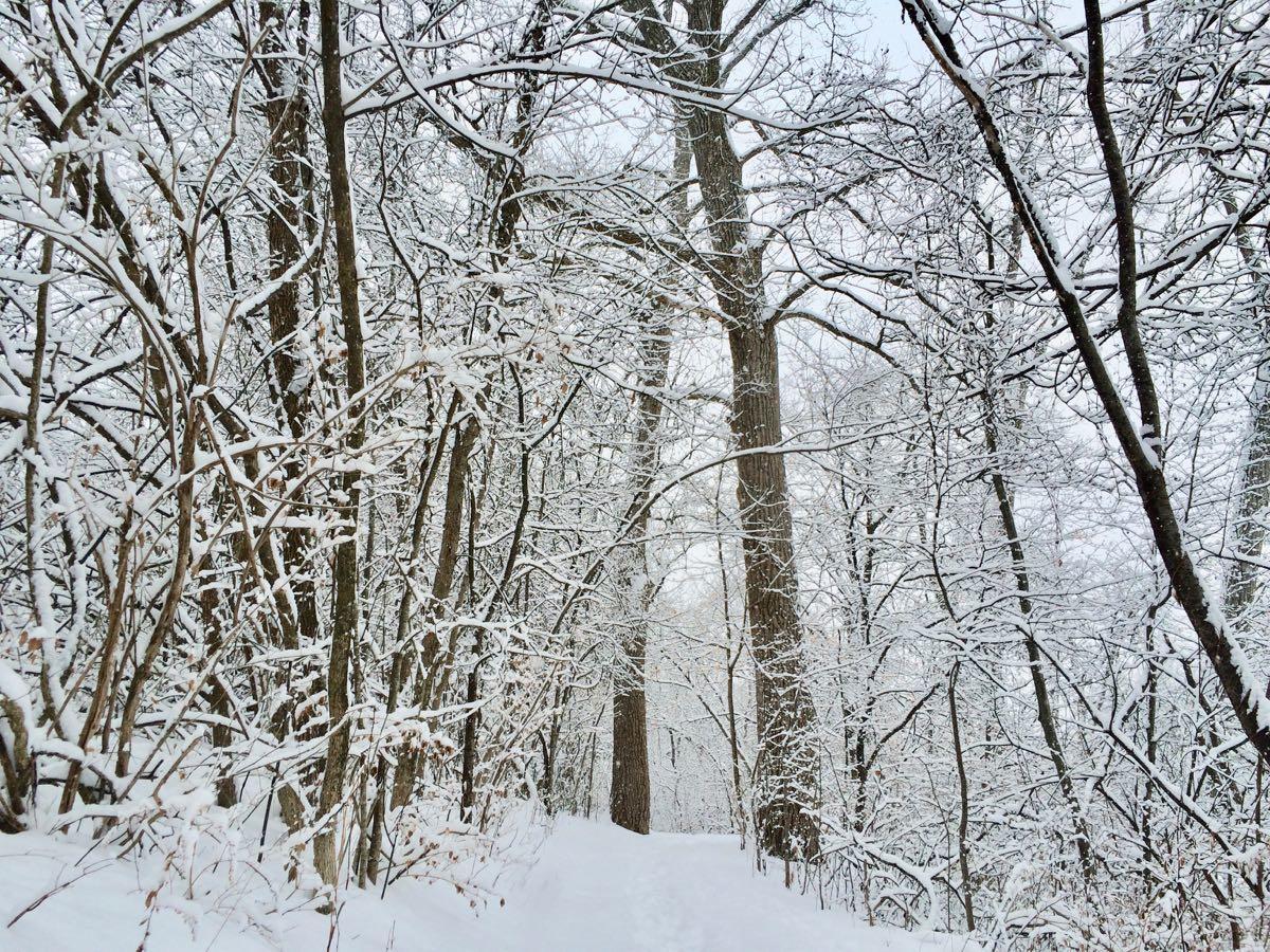 pretty snowfall 2018-01-17 Buckingham Pond trail