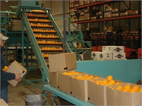 railex oranges