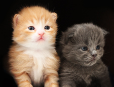 really cute kittens