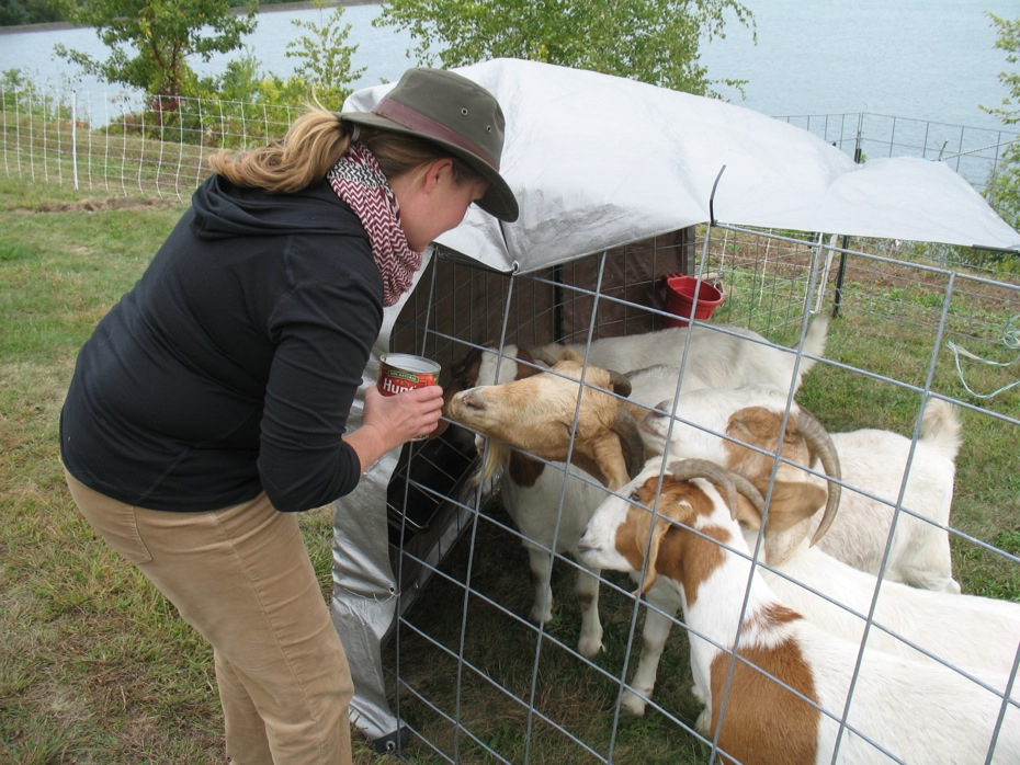 reservoir_goats_follow_up_12.jpg