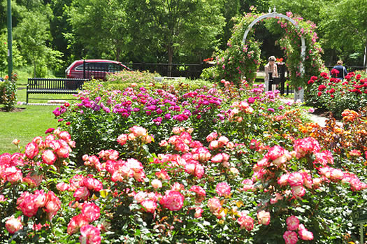 rose garden schenectady
