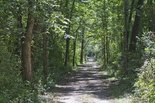 schodack_island_Schodack_island_trail.jpg
