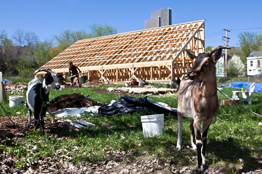 vacant lot radix center goats
