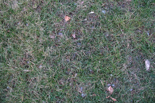 snow-free grass 2012-01-05