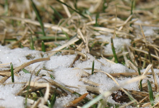 snow on green grass