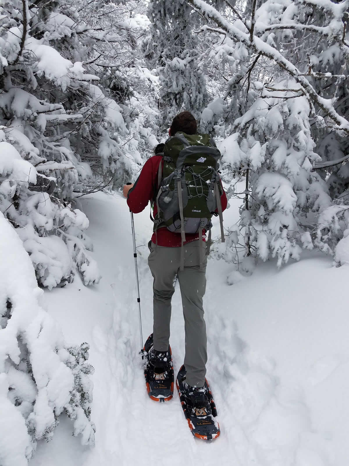 snowshoeing in woods by Cristin Steding