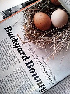 spirit magazine backyard hens article