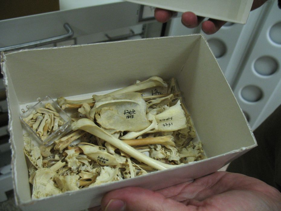 state_museum_bird_collection_03.jpg