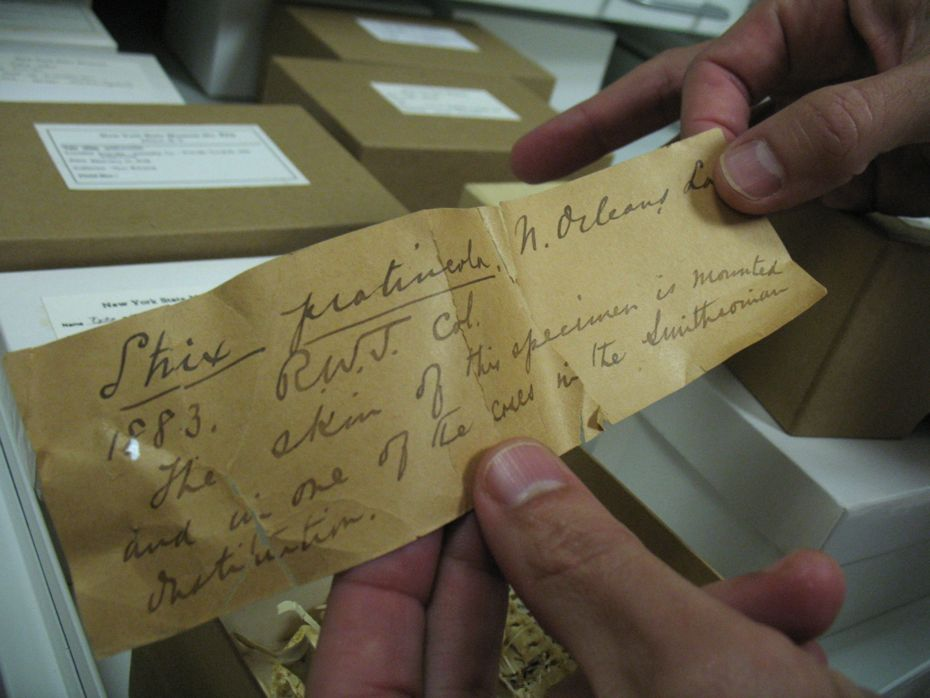 state_museum_bird_collection_04.jpg