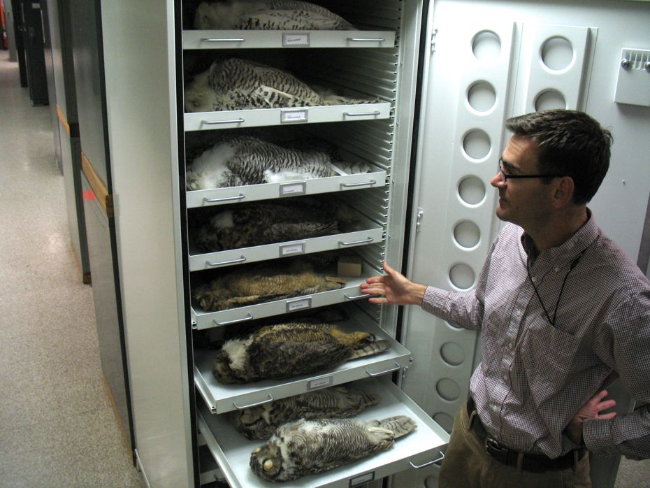 state_museum_bird_collection_05.jpg