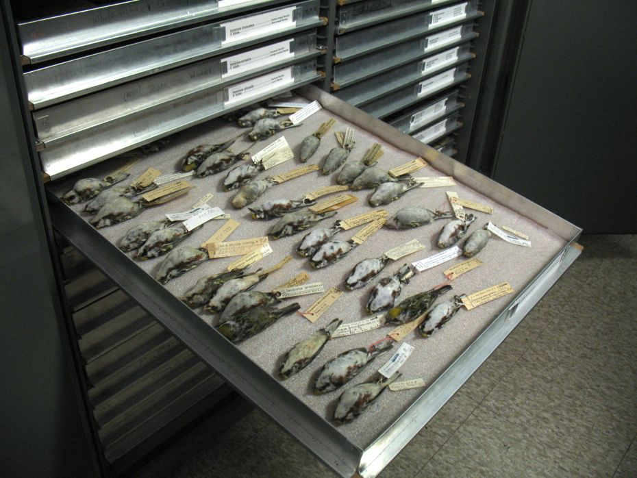 state_museum_bird_collection_07.jpg