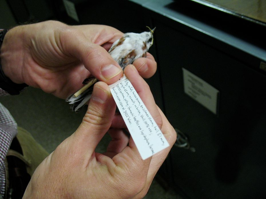 state_museum_bird_collection_08.jpg