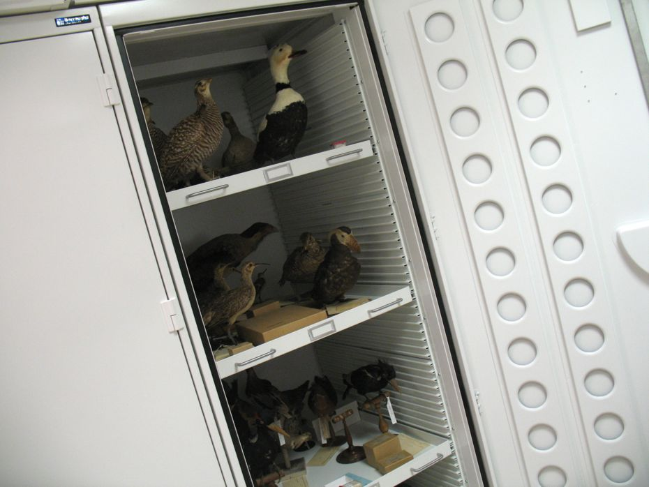 state_museum_bird_collection_11.jpg