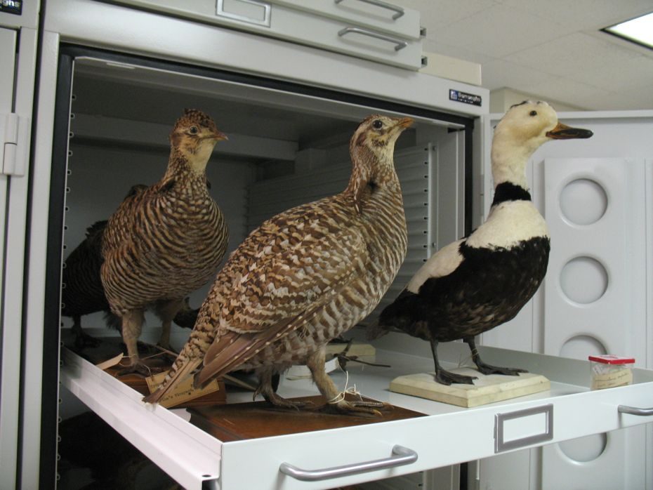 state_museum_bird_collection_12.jpg