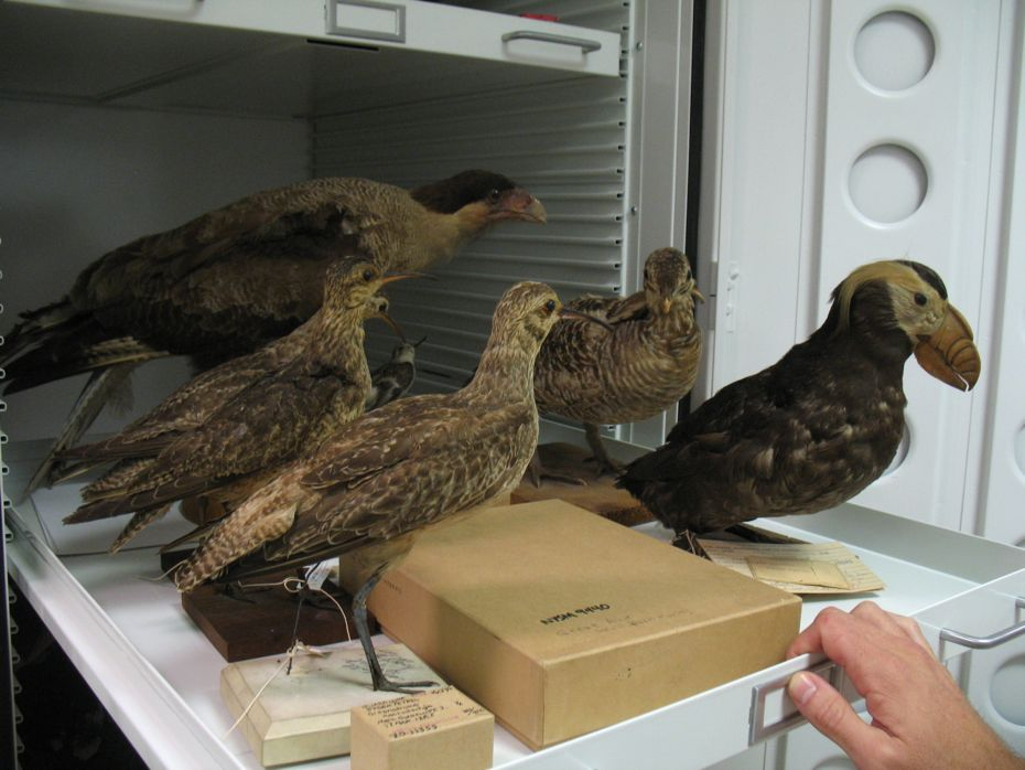state_museum_bird_collection_13.jpg