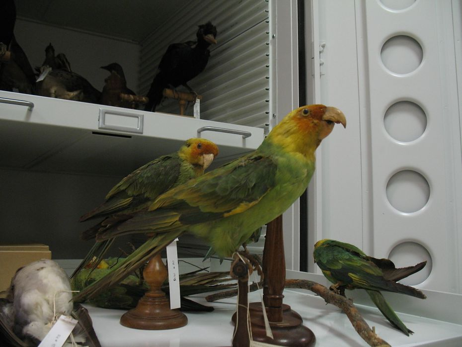 state_museum_bird_collection_14.jpg