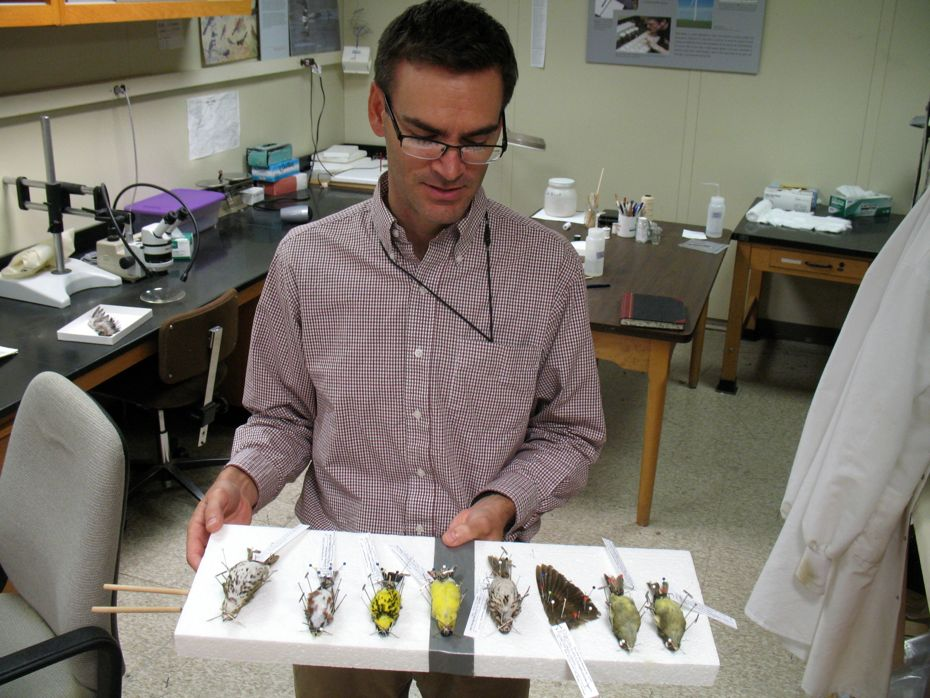 state_museum_bird_collection_21.jpg