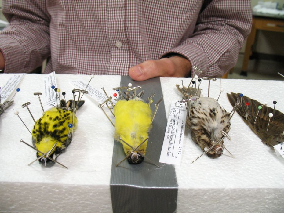 state_museum_bird_collection_22.jpg