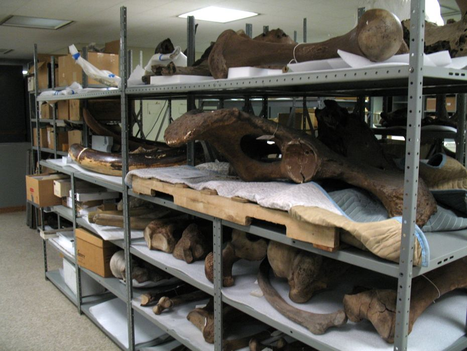 state_museum_bird_collection_29.jpg