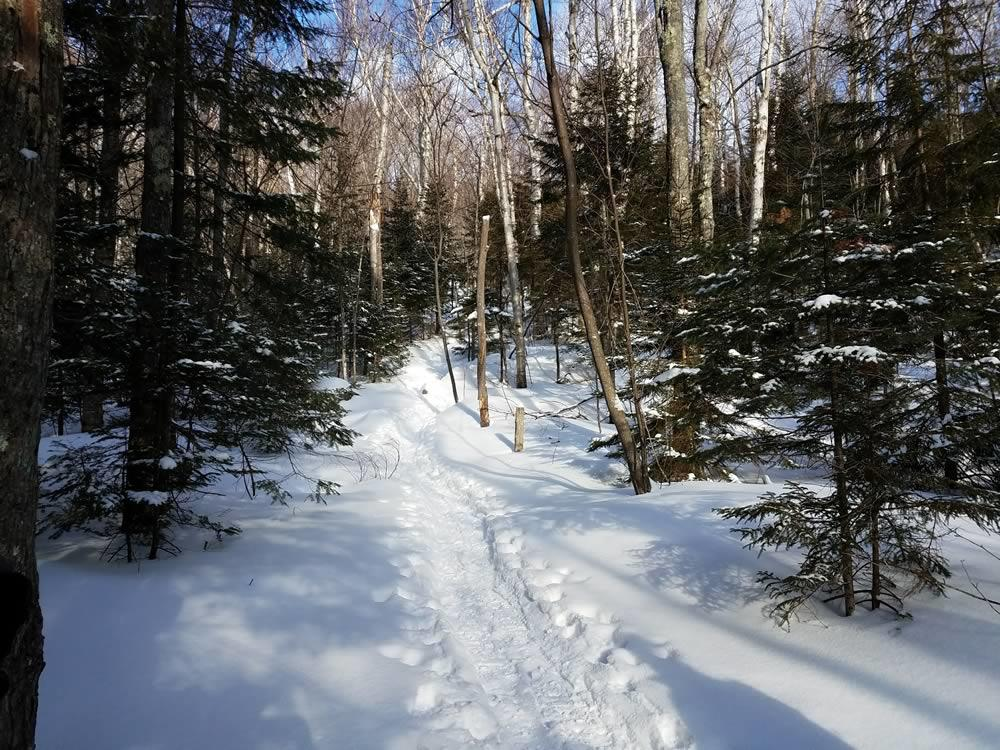 trail near Adirondack Loj winter
