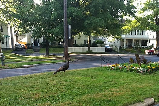 turkey melrose neighborhood albany